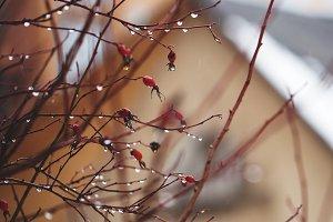 Nature spring bacground. Rain and wa