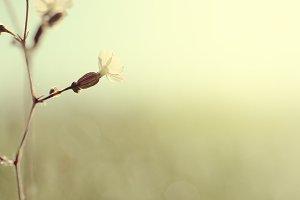 vintage flower at morning yellow sun