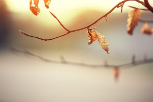 orange leaves and brunches at sunris