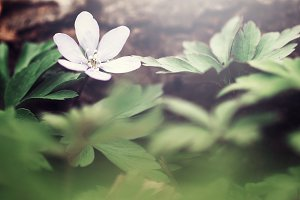 plants and flowers in forest. Nature