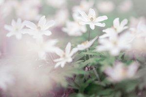 spring flowers. Nature outdoor backg