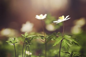 white flower in forest. Nature outdo