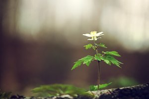 plants and flower in forest. Nature