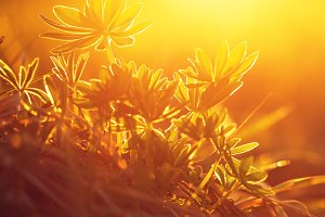 plants in field with bright sunshine