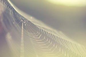 light vintage spider web on nature g