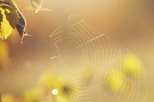 light vintage spider web in forestli