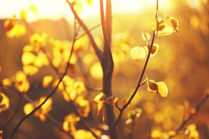 cmany little yellow leaves in sunny