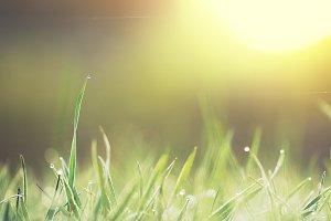 Green little grass in field. Nature