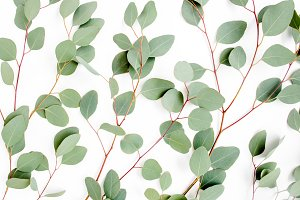 Eucalyptus branches pattern.