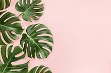 Tropical leaves monstera containing art, background, and beach