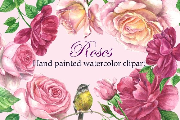 Roses@Bird Watercolor Clipart