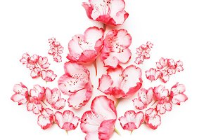 Pink flowers composing on white