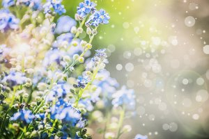 Summer nature with blue flowers