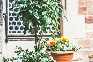 Patio flowers pots , outdoor