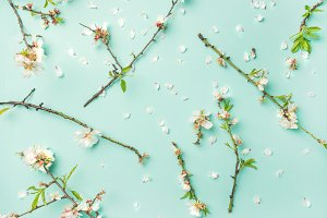 Spring floral background with almond blossom flowers over blue background
