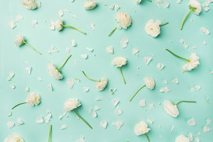 Flat-lay of white ranunculus flowers over blue background