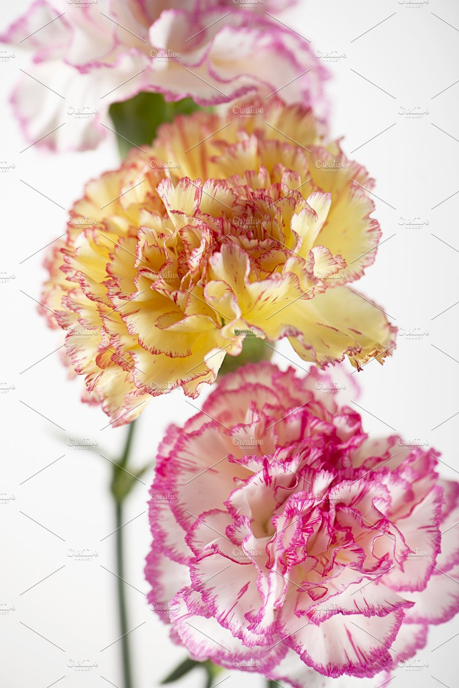 Vertical Shoot Of White And Pink Flowers Next To Yellow Flowers On