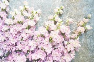 Varietal lilac delphinium.