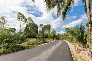 Tropical nature with palms and karst rock