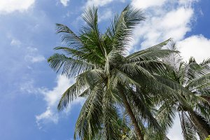 Tropical exotic perfect palm trees sky