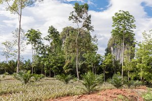 Tropical nature with palms and karst rocks