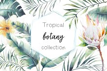 Tropical botany collection