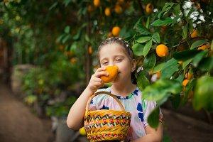 Beautiful little happy girl in colorful dress in lemon garden Lemonarium picking fresh ripe lemons in her basket