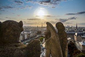 Gargoyle on Notre Dame In Paris