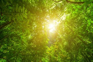 Sunlight in the Rainforest