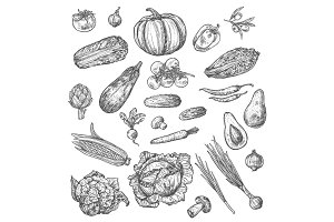 Vegetable and mushroom sketch of fresh veggies
