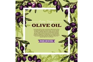 Olive fruit sketch frame of extra virgin oil label