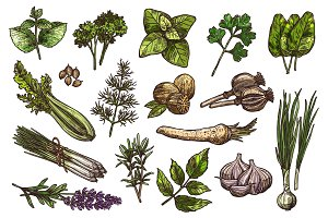 Herbs, spice and condiment sketch of food design
