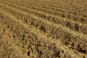 Soil for agriculture shoveling tractor