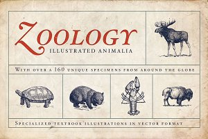 Zoology Animal Illustrations