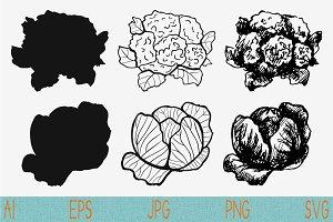 Cauliflower, cabbage vector svg png