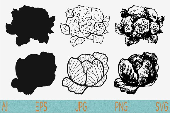 Cauliflower Cabbage Vector Svg Png