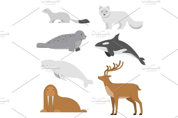 Northern And Arctic Animals Vector Illustrations In Flat Style