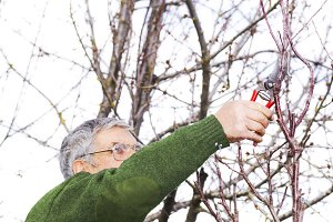 gardening in trimming pruning trees