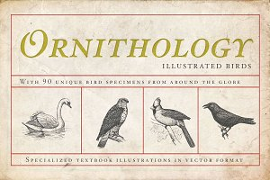 Ornithology Bird Illustrations