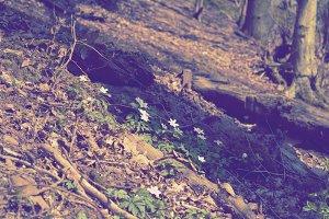 Spring flowers awaken in a forest