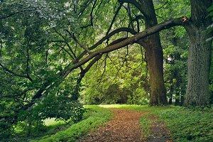 In old park