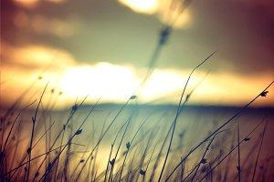 Wild grass at summer sunset vintage