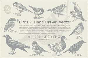 Birds 2__Hand Drawn Vector