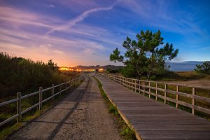 Wooden boardwalk and trail