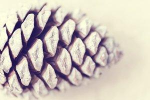 Pine cone macro vintage