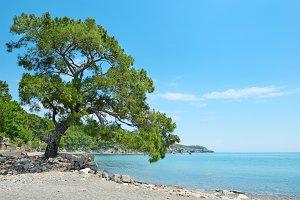 Big beautiful tree on the shore
