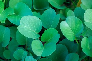Green oval leaves background