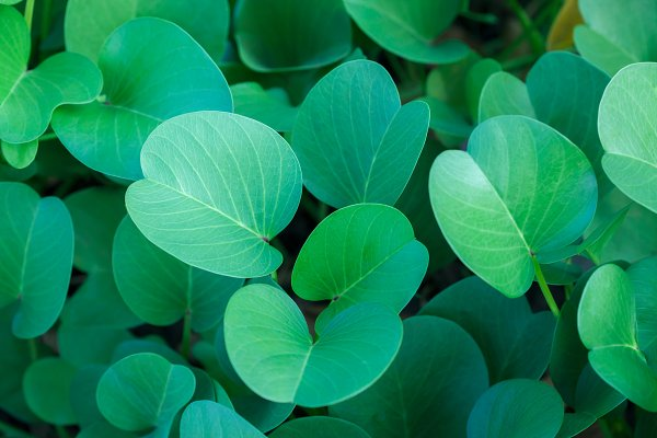Food Stock Photos - Green oval leaves background