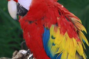 Cancun • Macaw
