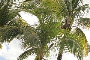 Cancun • Palm Trees